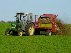 agriculture-62417_640[1]